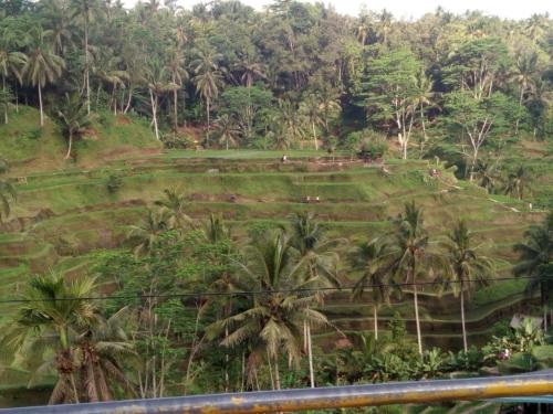インドネシアのライステラス